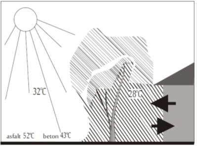Wpływ drzew na obniżanie temperatur w mieście