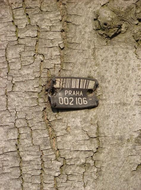 Tabliczki   informacyjne o drzewie