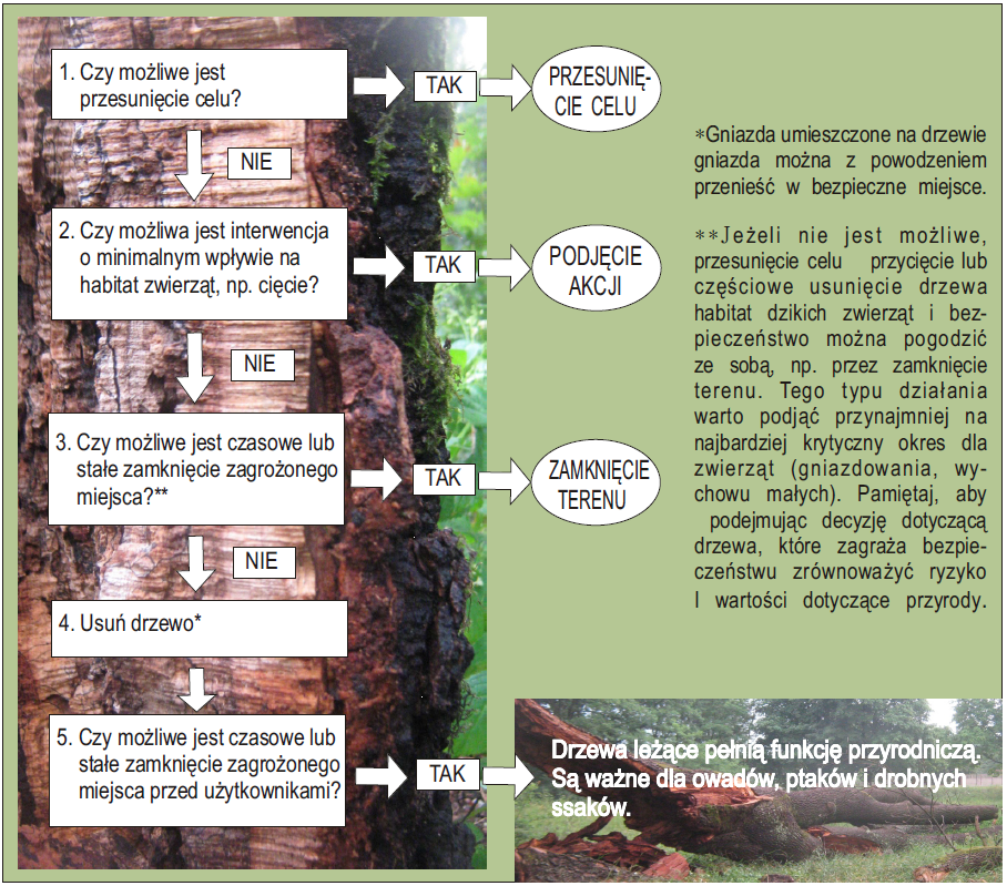 Schemat postępowania z drzewami zagrażającymi bezpieczeństwu